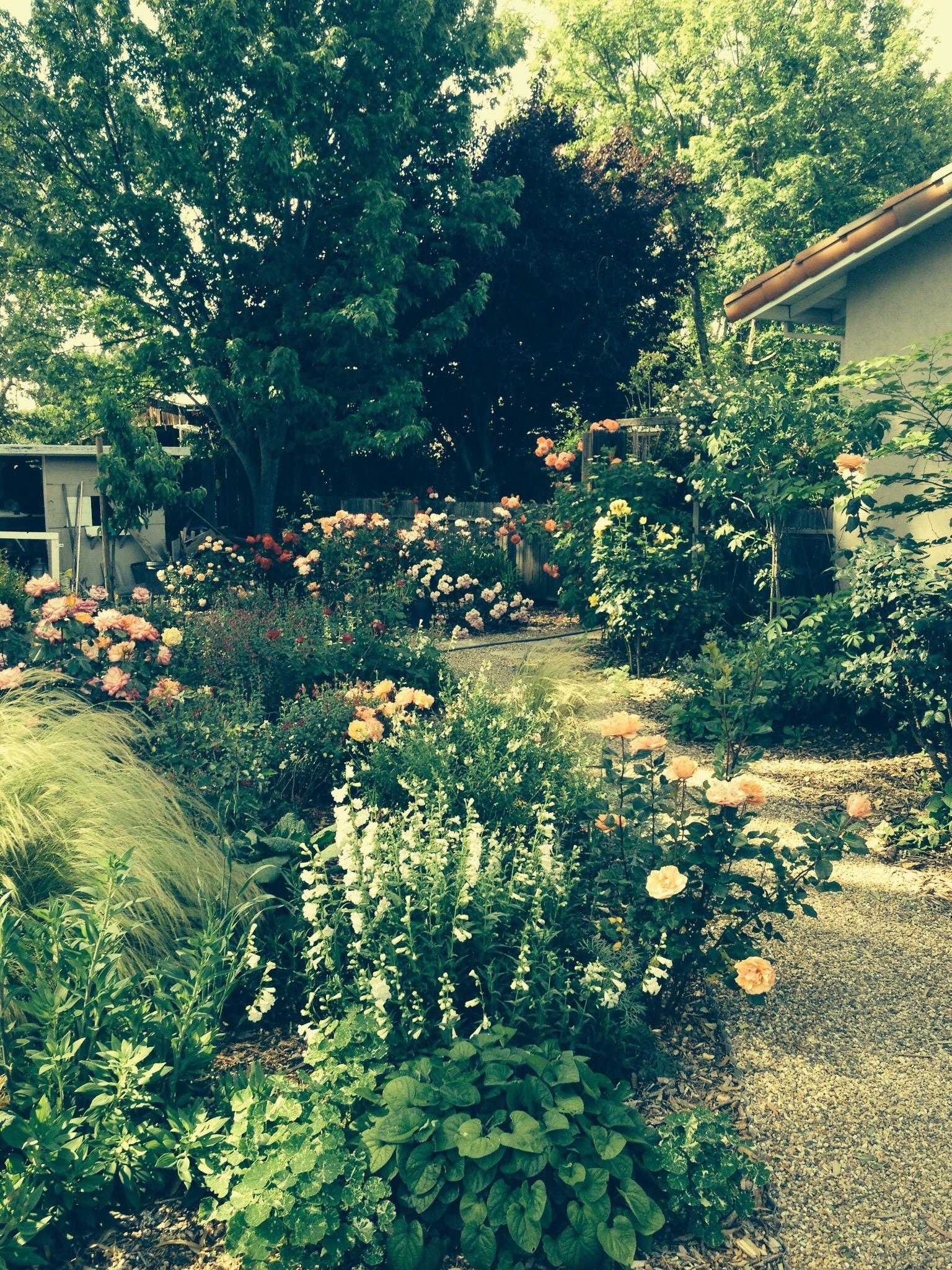 Sonoma landscape design and architecture regina rollin for Sonoma garden designs