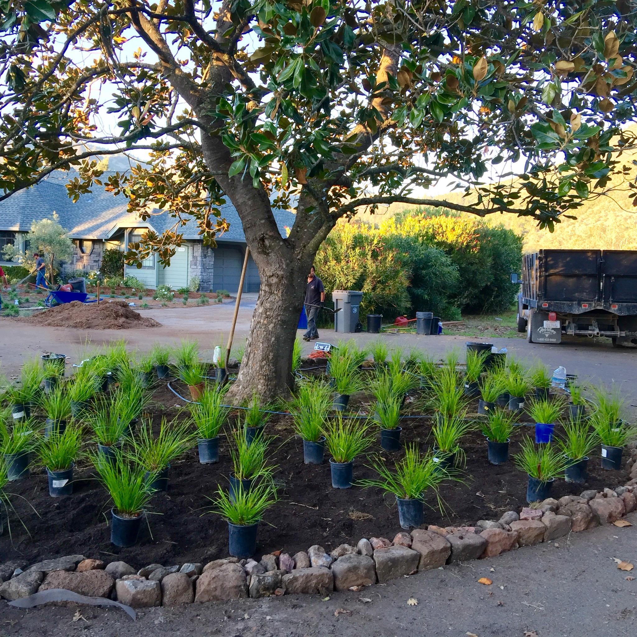 Landscaping Mulch Regina : Sonoma landscape design page regina rollin on